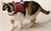 Katten loopharnas comfort