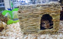 Happy pet grassy hideaway verstopplek
