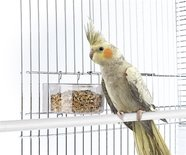 Imac voerbak parrot