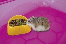 Imac mini voerbak hamster