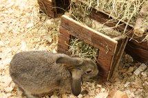 Happy pet raw houten hooiruif