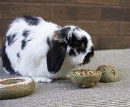 Rosewood treat 'n' gnaw bunny buns