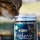 Croci euphoria catnip pot
