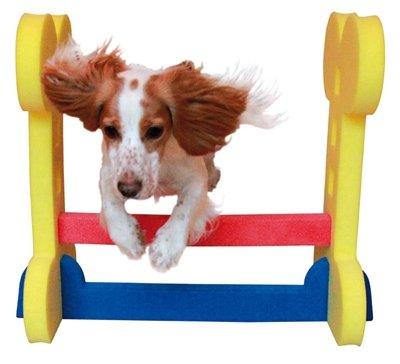 Agility kleine hond horde
