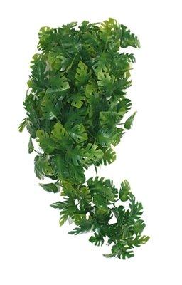 Komodo plant split philodendron